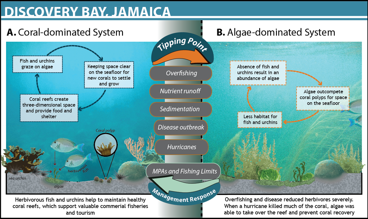 biophysical interactions on the reef Interdisciplinary collaboration among social, biophysical, and  i) modulate  human interactions with coral reef ecosystems and their associated impacts and .