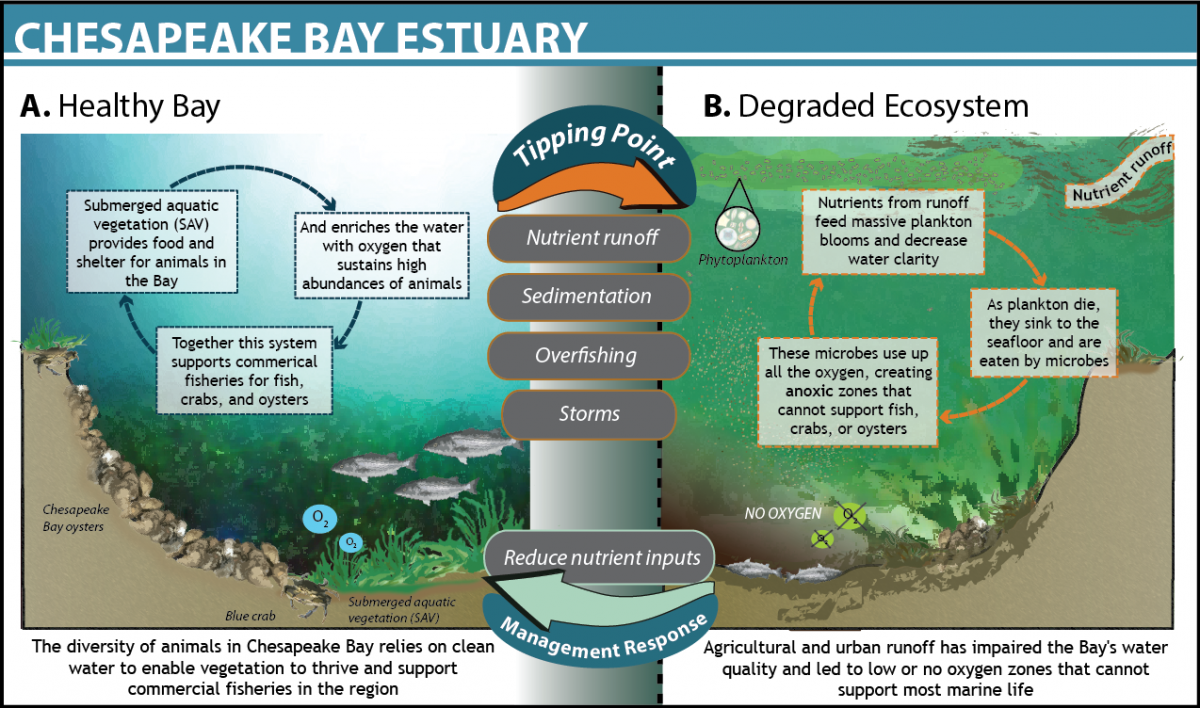 the consequences of environmental economic impact of pollution in the chesapeake bay Changes such as pollution from vehicles, factories, farm operations and gas powered lawn tools are man-made and have caused a negative impact on the chesapeake bay.