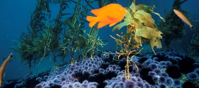 Synthesizing marine ecosystem shifts around the world | Ocean ...